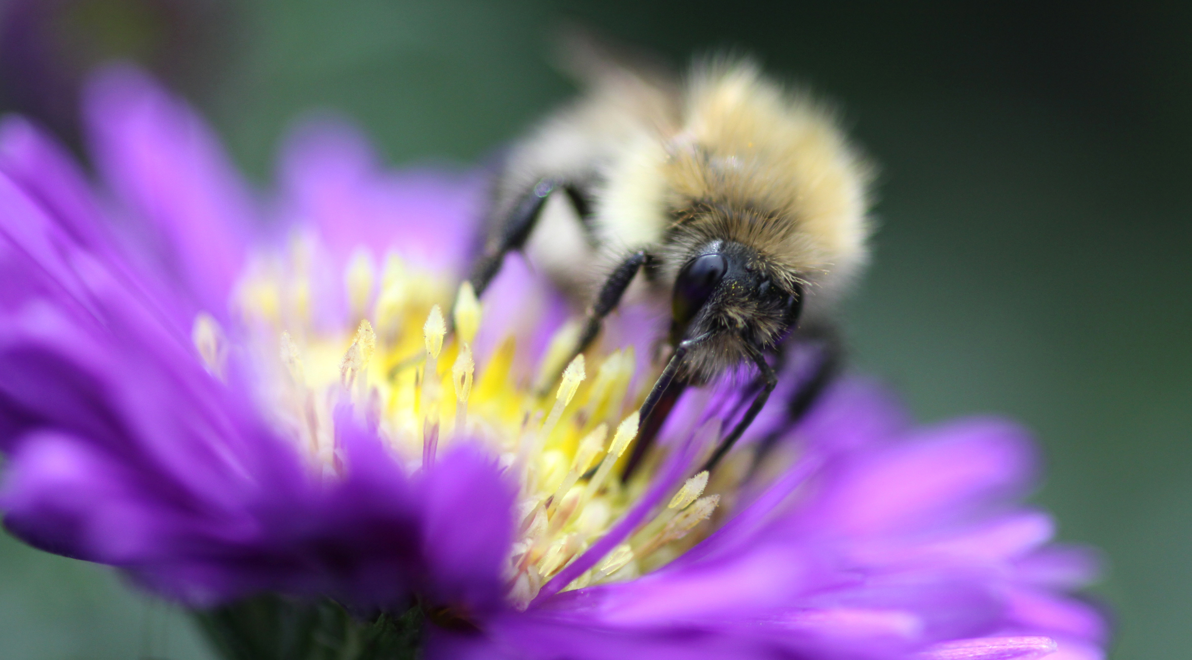 Bees and other pollinators are crucial to our planet's health